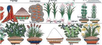 Plant massag